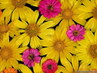 yellow-colorful-flowers-wallpapers-1024x768.jpg